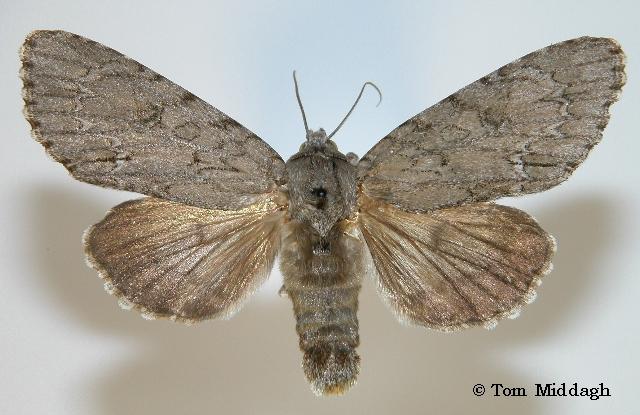 Excellent teen spanishfly