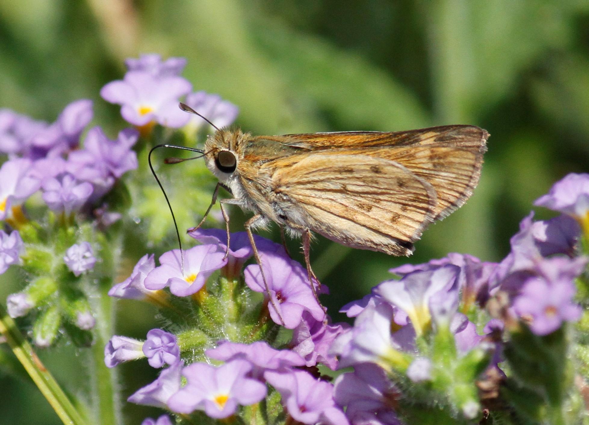 8 Best Butterflies & Moths images   Butterflies, Butterfly ...