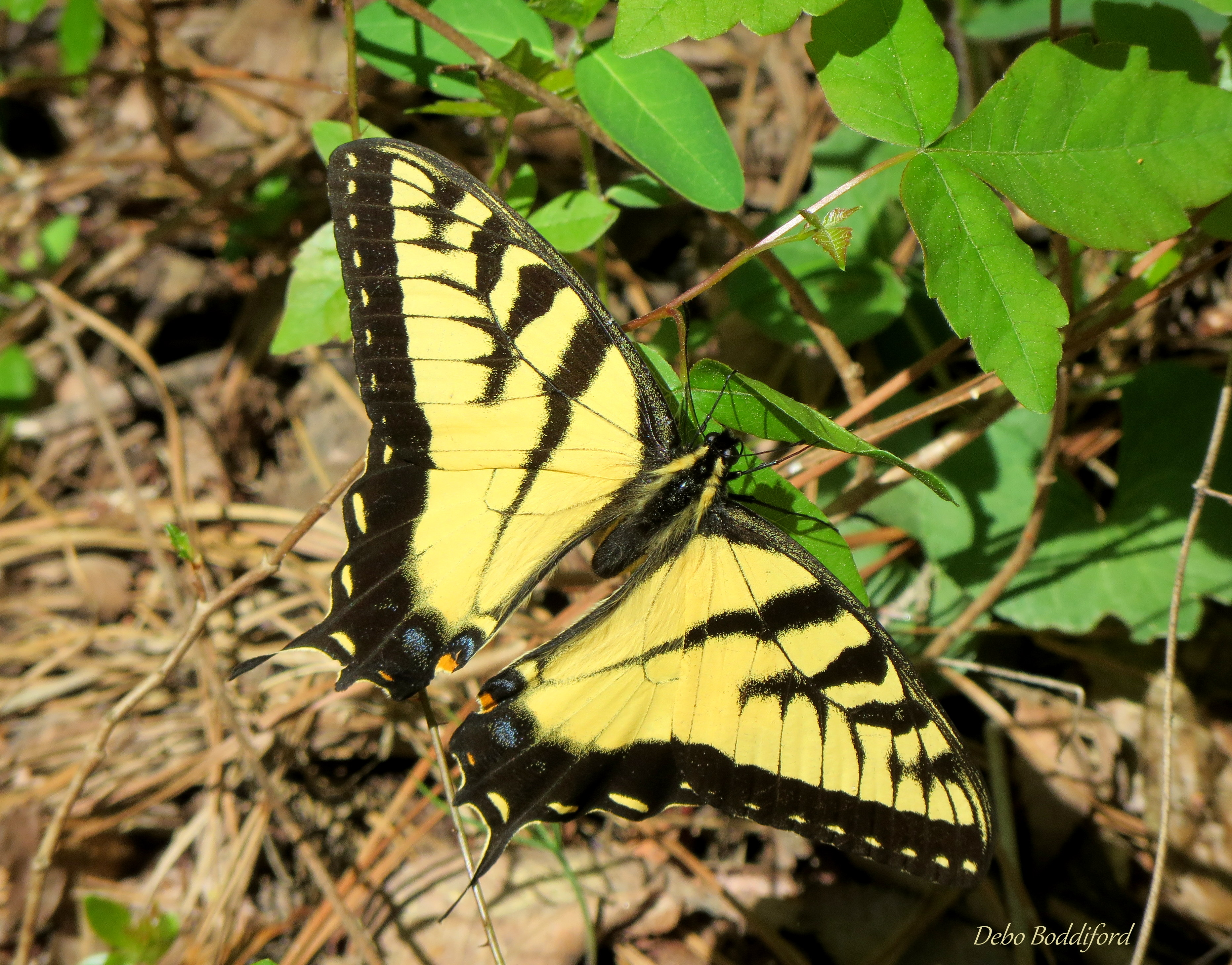 The Butterfly Site - The #1 Butterflies Information Source