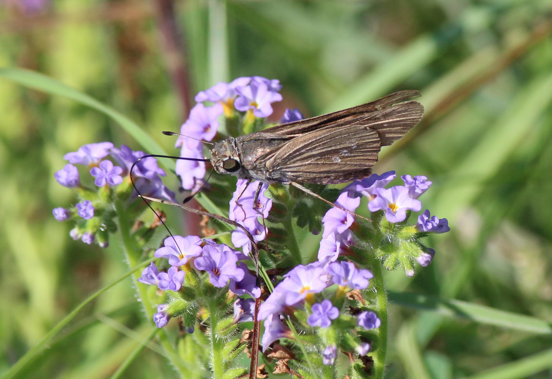 Exploring Nature: Butterflies & Moths: A Comprehensive ...