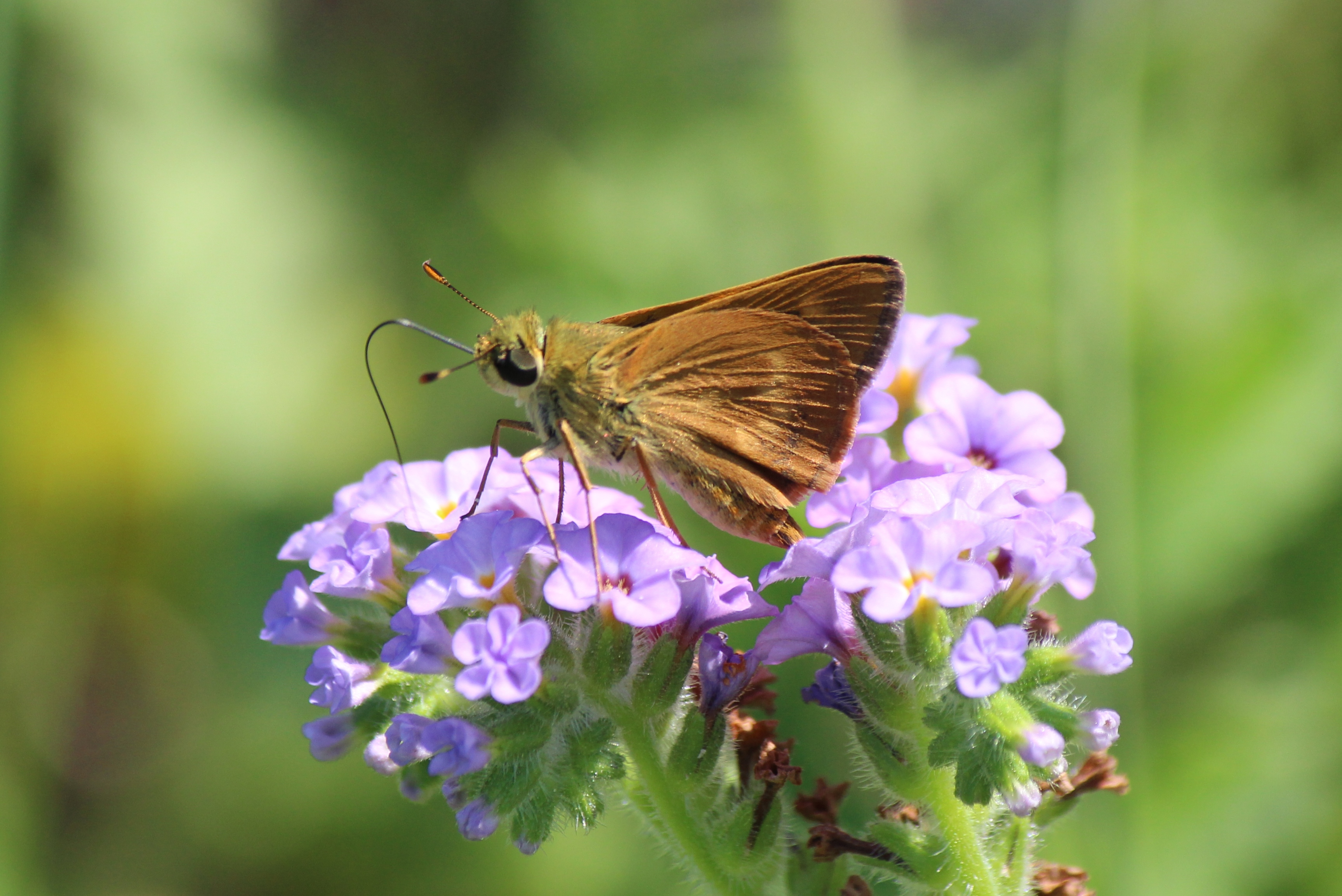 The Butterfly Company - Insects, Beetles, Moths, & Butterflies