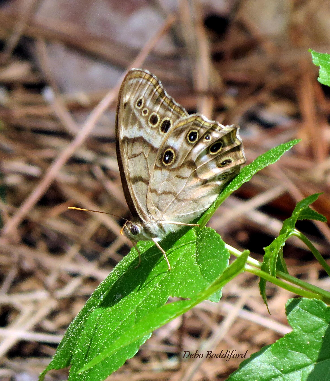 butterflies and moths   eBay