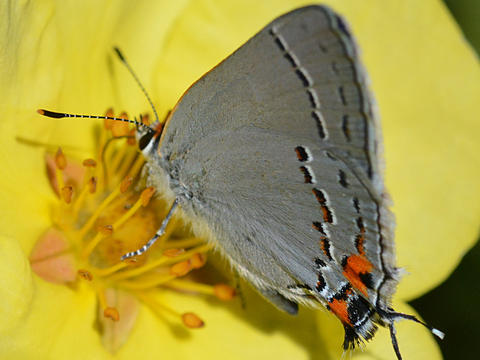 Image result for grey butterflies